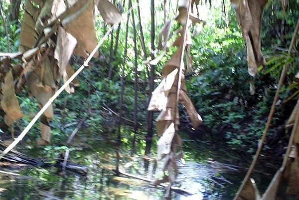 Nascente do córrego Caçador, em Xambioá