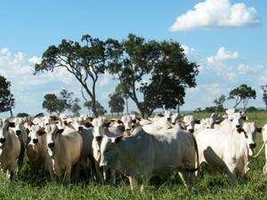 Emprego formal na agropecuária apresenta sucessivas quedas
