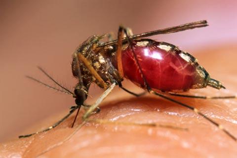 dengue11