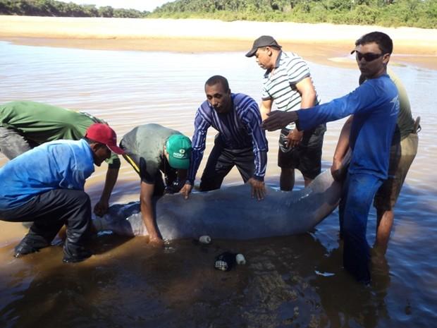 parceria_entre_naturatins_e_fazendeiros_salva_boto_em_lagoa_da_confusao_foto_evandro_rodrigues-gov_tocantins_2