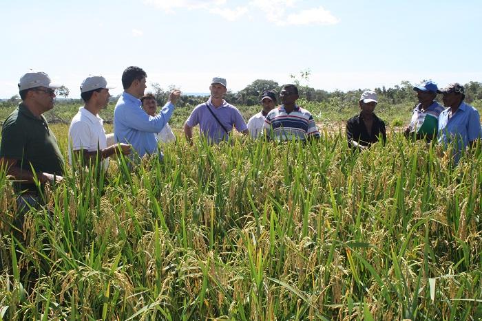 dia-de-campo-arroz-araguatins-alaides-cardoso-rurtaltins49