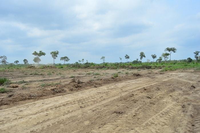 IMPERATRIZ: Ceasa será construída às margens da BR-010 - Folha do Bico